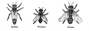 Vintage Bee Illustration - Clip Art