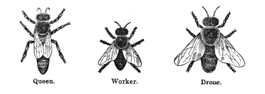 vintage bee clip art - photo #40