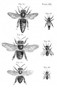Vintage Bee Illustrations