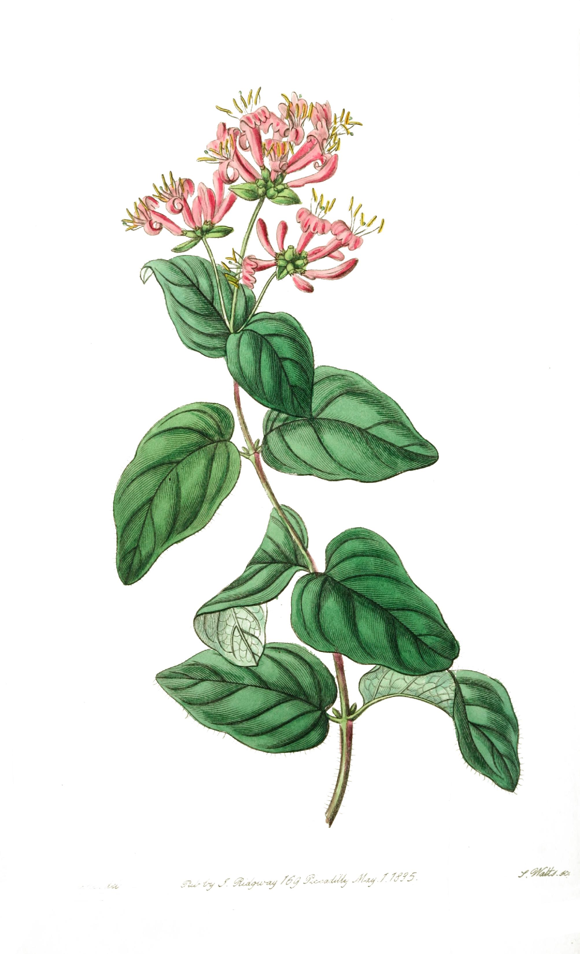 Flower Printed Print – Pink Flower