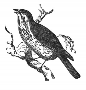 Vintage Clip Art Bird Illustration