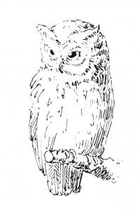 Vintage Clip Art Illustration - Owl