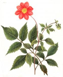 Free Vintage Botanical Prints