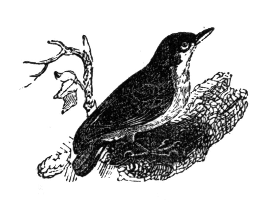 Vintage Bird Art Black And White Vintage Bird Clip Art ...