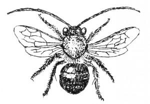 Free Vintage Bee Clip Art