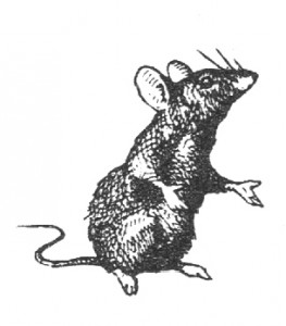 Free Vintage Graphic - Tiny Mouse Clip Art