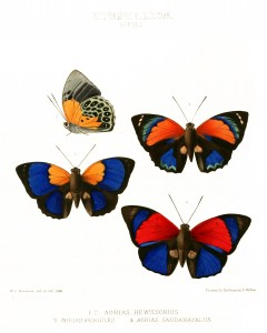 Vintage Exotic Butterfly Print