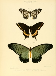 Free Vintage Butterfly Print